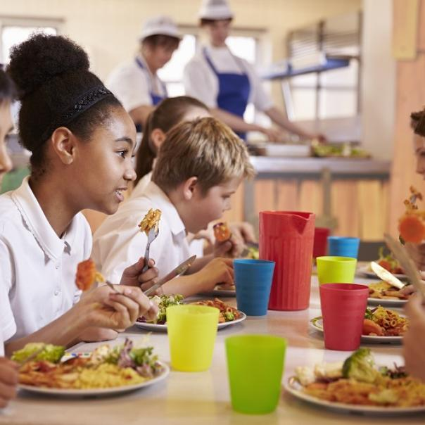 cornwall public local food procurement care homes schools